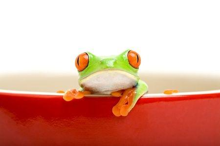 Home Care agency Frog in a pot