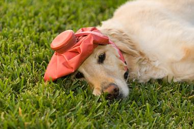 sad dog with a headache